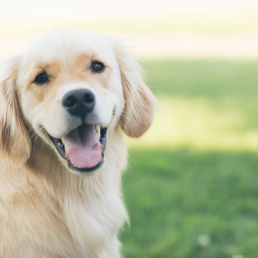 Dog Training Classes New Haven Ct